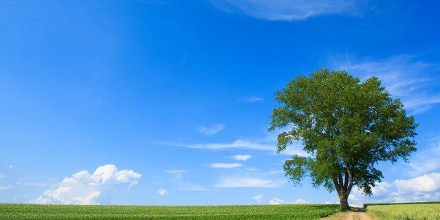 樹木小学生